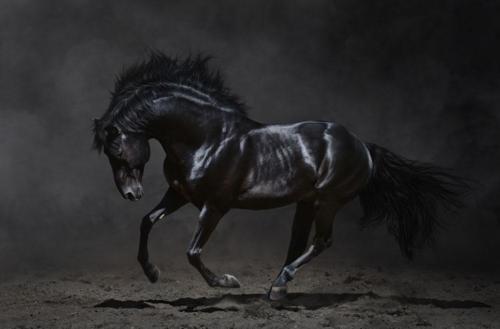 乾坤未定,你我皆是黑马